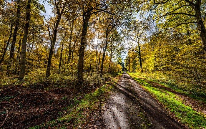 Nordic Walking: Die perfekte Sportart für Corona & den Lockdown