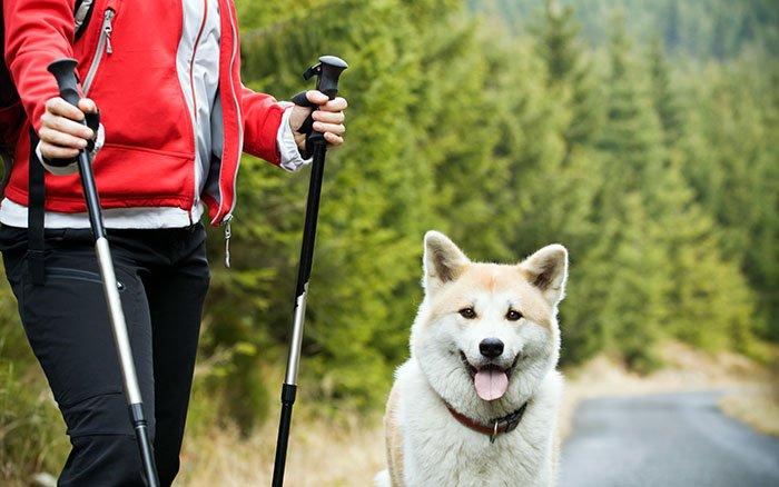 Nordic Walking mit Hund: Outdoor-Vergnügen für Mensch und Tier