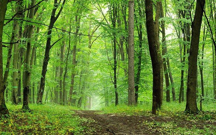 Warum ist Waldluft so gesund? Auswirkungen auf Körper & Geist